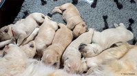 pups-1tot2weken-TH_1678