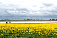 tulpenroute_TH_04630