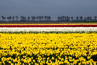 tulpenroute_TH_04632