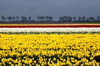 tulpenroute_TH_04631