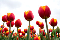 tulpenroute_TH_04644
