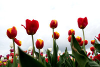 tulpenroute_TH_04647