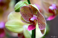 orchideeenhoeve_TH_09381